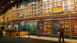 Indoor-Butterfly-Exhibits-Courtesy-of-Florida-Museum-of-Natural-History